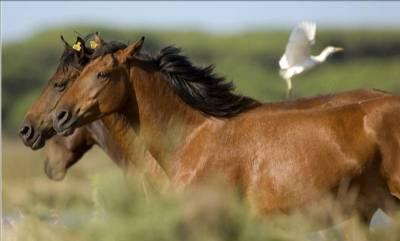 Retuerta Horse