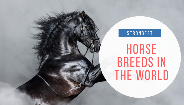 strongest horse breeds