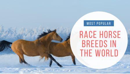 Race Horse Breeds
