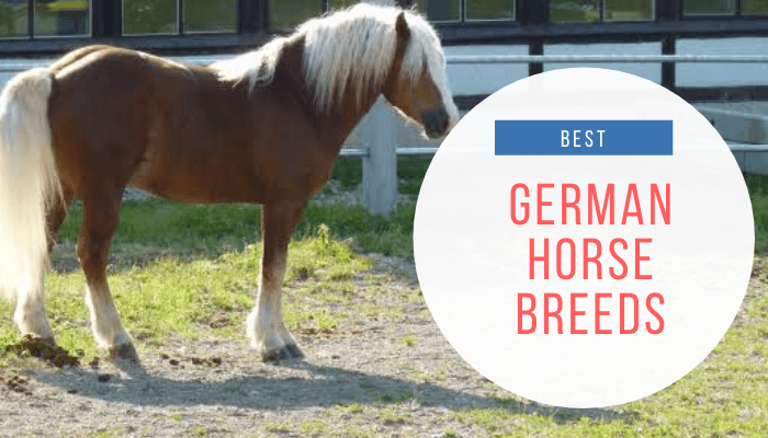 German horse breeds