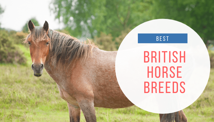 British Horse Breeds